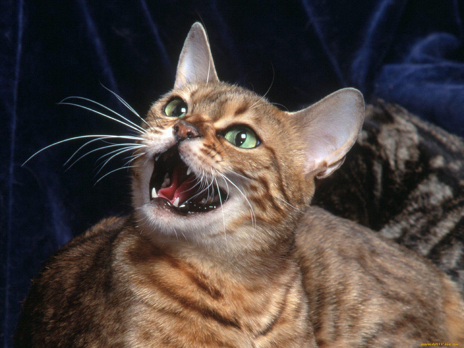 городе картинки с говорящими котами всем привет